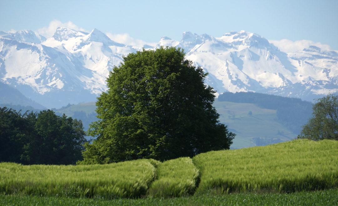 Oberhalb von Mühlau | Aargau