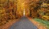 Herbstwald in Auw