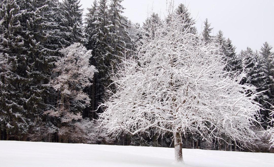 Im Winter auf dem Horben