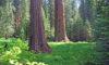 Sequoia Kings Canyon USA